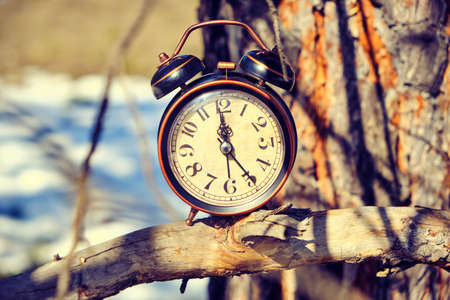 Old retro alarm clock in the forest on a branch on a bright, warm spring day