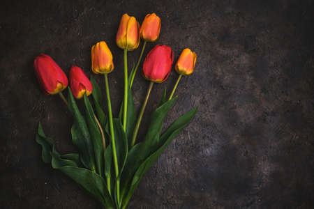 Seven red and yellow tulips on a black background