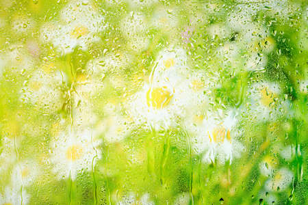 Background with white daisies behind wet misted glass in raindrops Archivio Fotografico