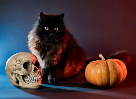 Black cat on a dark background with a skull and pumpkin for Halloween Imagens