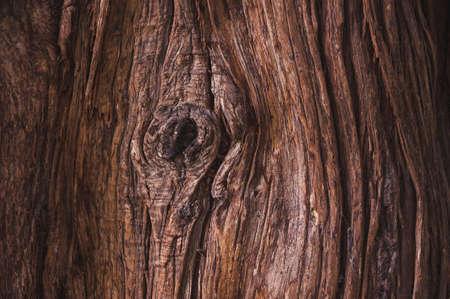 dark brown: Dark brown texture of bark of an old tree Stock Photo