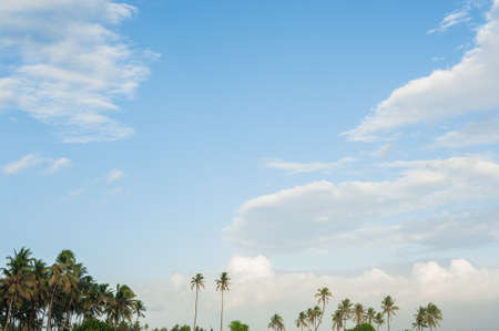 Blue sky in the clouds and palm line.