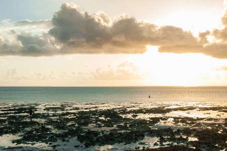 Locals harvest the seaweed at low tide. Golden dawn on Zanzibar island, Tanzania.