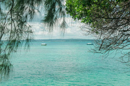 View of the blue ocean through the trees. Tropical landscape in the Indian ocean. Фото со стока