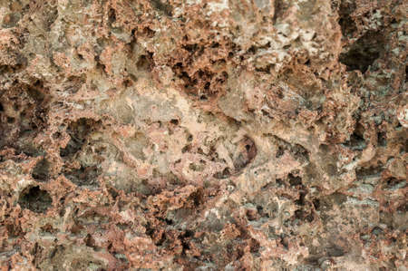 The texture of the extruded coral. Stone sea background, pumice.