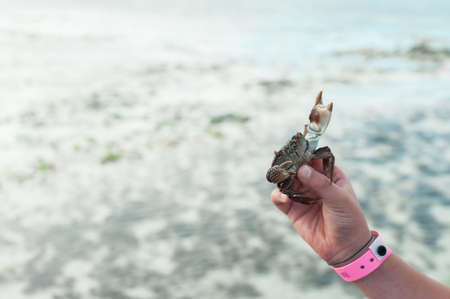 Live crab in hand on background of ocean.
