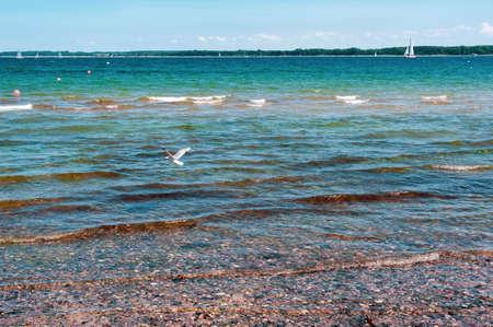 Seagull flying over the sea. Landscape of the Baltic sea coast
