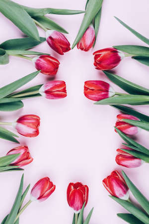 Delicate background with tulips on March 8. Figure 8 of flower buds. Beautiful postcard for a woman on holiday