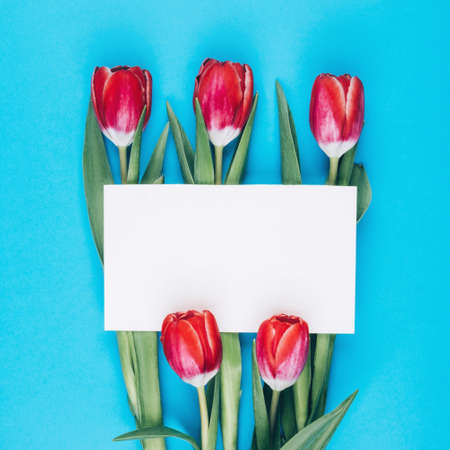 Juicy blue background with red tulips and a postcard for text. Beautiful design for a womens holiday. Flowers for mom. Space for text
