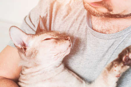 Sphinx cat in the hands of a man. Pets, love for animals. 免版税图像