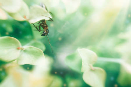 Curious worker ant looks out from behind a leaf. Beautiful artistic background with insects