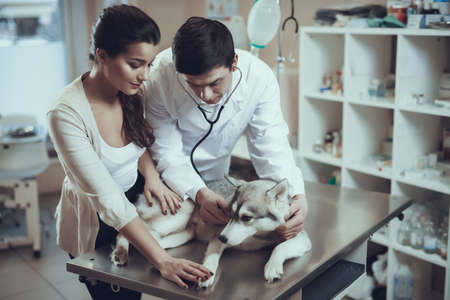 Young woman with Siberian Husky at reception with experienced veterinarian. Imagens