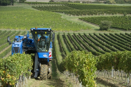 Mechanical harvesting of grapes in the vineyard Stock Photo - 23078061