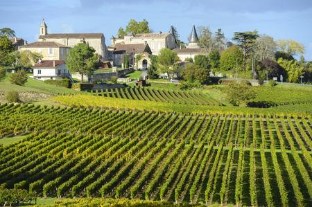 サン テミリオン、ボルドーのブドウ畑のブドウ園