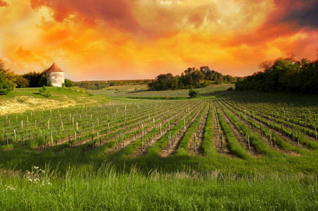 Vineyards of Saint Emilion, Bordeaux Vineyards Stock Photo - 30496031