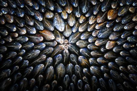 food state: Mussel-Eclade-Food and Drink