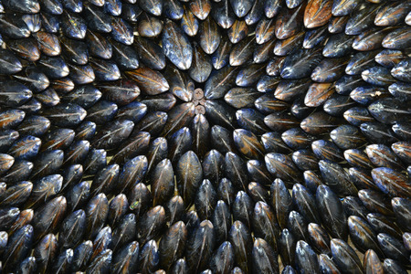 prepared shellfish: Mussel-Eclade-Food and Drink