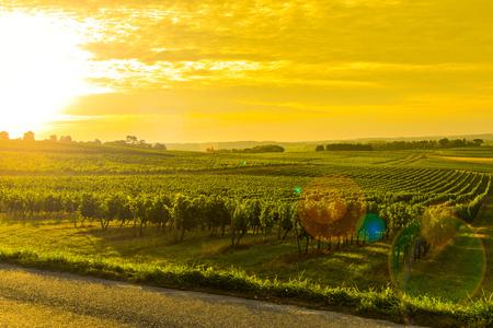viñedo: Vineyard Sunrise - Burdeos viñedo-Francia, Aquitania Foto de archivo