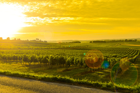 Vineyard Sunrise - Bordeaux Vineyard-France, Aquitaine Stock Photo - 44151456