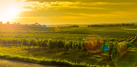 Vineyard Sunrise - Bordeaux Vineyard-France, Aquitaine, Gironde, 33, Targon. Archivio Fotografico