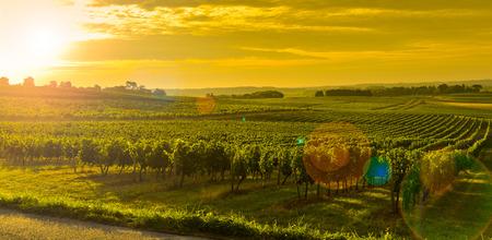 Vineyard Sunrise - Bordeaux Vineyard-France, Aquitaine, Gironde, 33, Targon. Stock Photo