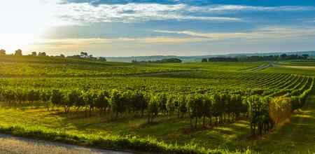 Vineyard Sunrise - Bordeaux Vineyard-France Stock Photo - 44151543