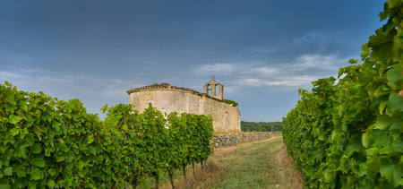 the old church: Vineyard and old church Sunrise