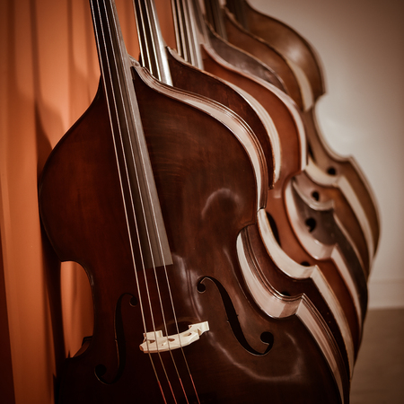 cellos: Close up of a group of cellos in the workshop of violin maker