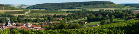campagne: Champagne vineyards in the Cote des Bar area of the Aube department near to Arrenti�res, Champagne-Ardennes, France, Europe