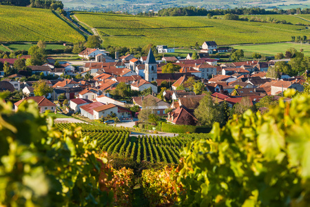 campagne: Champagne vineyards in the Cote des Bar area of the Aube department near to Baroville, Champagne-Ardennes, France, Europe Stock Photo