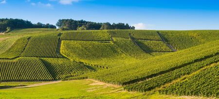quoted: Champagne vineyards in the Cote des Bar area of the Aube department near to Les Riceys, Champagne-Ardennes, France, Europe Stock Photo