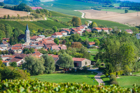 single whip: Champagne vineyards in the Cote des Bar area of the Aube department near Rizaucourt-Buchey, Champagne-Ardennes, France, Europe Stock Photo