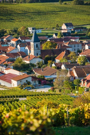single whip: Champagne vineyards in the Cote des Bar area of the Aube department near to Baroville, Champagne-Ardennes, France, Europe Stock Photo