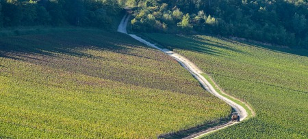 quoted: Champagne vineyards in the Cote des Bar area of the Aube department near to Viviers sur Artaut, Champagne-Ardennes, France, Europe