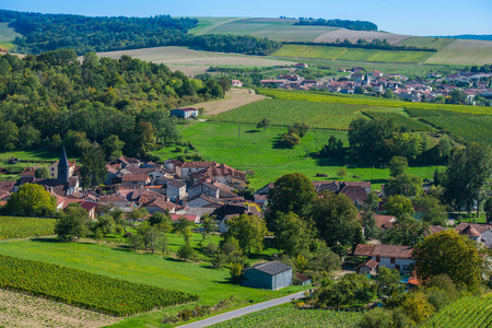 single whip: Champagne vineyards in the Cote des Bar area of the Aube department near to Colombe la Fosse, Champagne-Ardennes, France, Europe Stock Photo