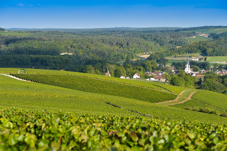 single whip: Champagne vineyards in the Cote des Bar area of the Aube department near to Les Riceys, Champagne-Ardennes, France, Europe Stock Photo
