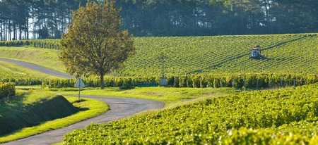 quoted: Champagne vineyards in the Cote des Bar area of the Aube department near to Celles sur Ource Champagne-Ardennes, France, Europe