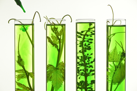 laboratory research: Oenology, young vine shoots in red test tubes, Research Laboratory Biological