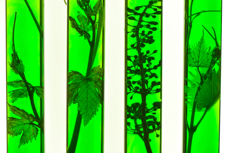 oenology: Oenology, young vine shoots in red test tubes, Research Laboratory Biological