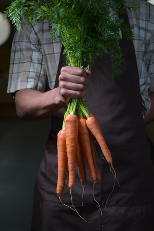 carots: Organic fruit and vegetables. Farmers hands with freshly harvested carrots., brown apron Stock Photo
