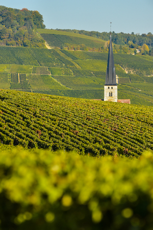 quoted: Champagne vineyards Villedomange in Marne department, Champagne-Ardennes, France, Europe