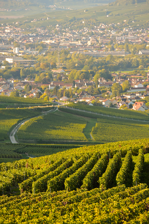 single whip: Champagne vineyards in Marne department, Champagne-Ardennes, France, Europe