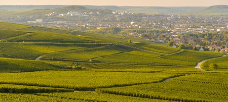 campagne: Champagne vineyards in Marne department, Champagne-Ardennes, France, Europe