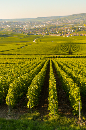 quoted: Champagne vineyards in Marne department, Champagne-Ardennes, France, Europe
