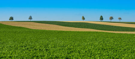 Green trees in a fields on blue sky, Champagne, France, Europe Stock Photo