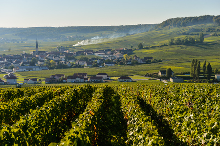 campagne: Champagne vineyards Villedomange in Marne department, Champagne-Ardennes, France, Europe