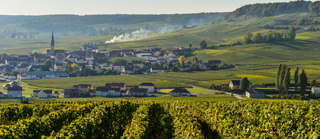 Champagne vineyards Villedomange in Marne department, Champagne-Ardennes, France, Europe