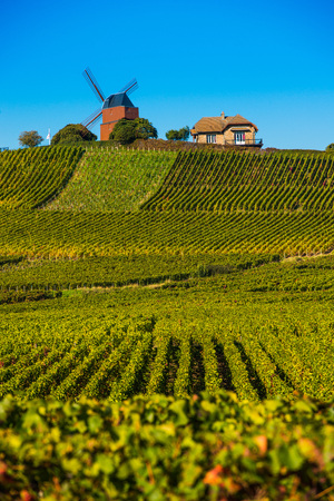 champagne region: Vineyard and windmill Champagne Region near Vernezay France Europe Stock Photo
