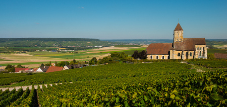 Champagne vineyards Cuis in Marne department, Champagne-Ardennes, France, Europe