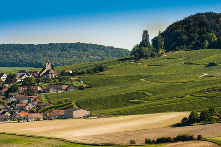 single whip: Champagne vineyards Cuis in Marne department, Champagne-Ardennes, France, Europe
